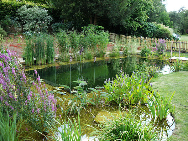 Natural swimming ponds pools aquatic consultant for Design agency pond